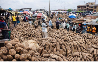 Nigeria Begins Registration of Yam Farmers for Export